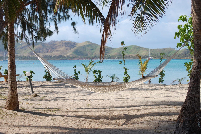 Fiji Hammock Water Plants