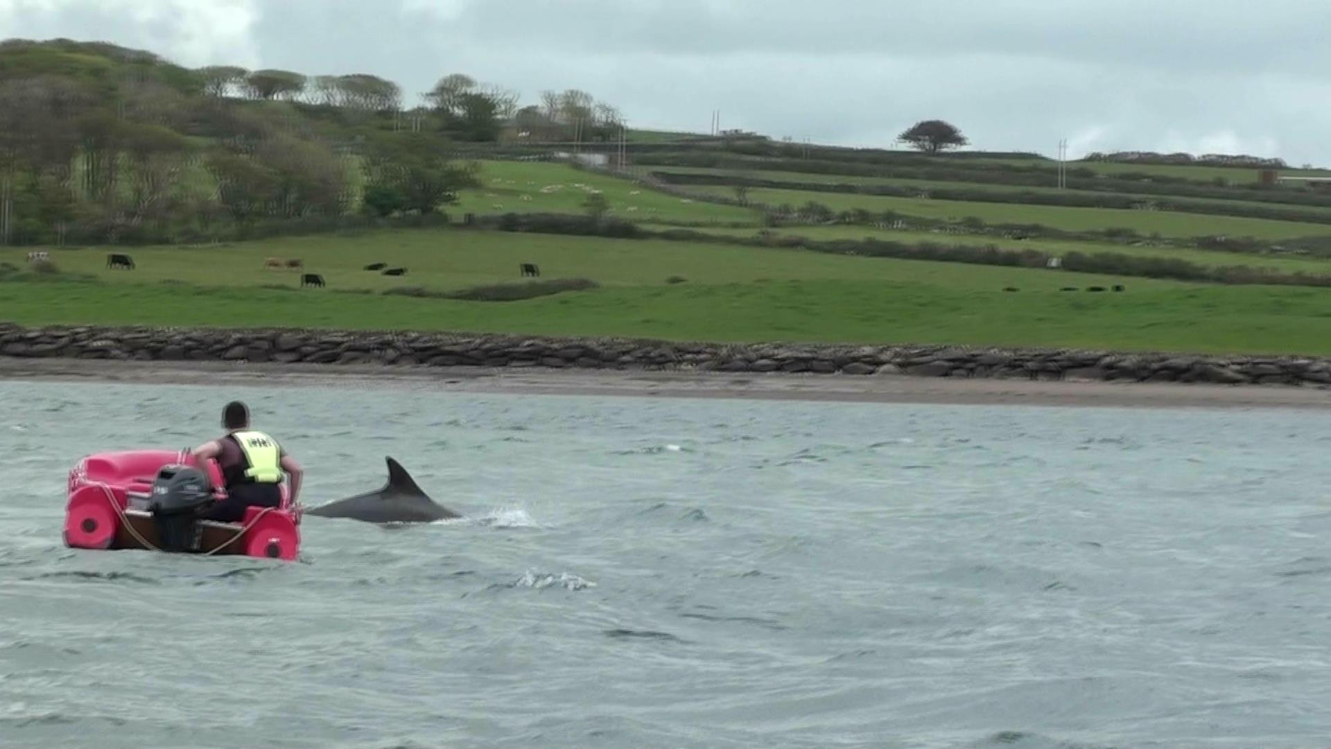Funghi the dolphin in Dingle Bay