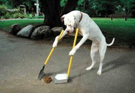 Funny dog cleaning up poo.
