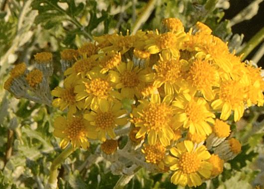 Nikon D800 Sample image