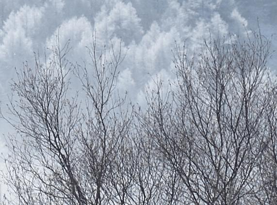 Nikon D800E Sample image Snow Trees