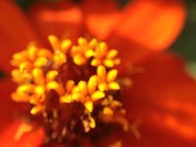 Easy-Macro iPhone 4S - flower macro