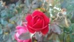 IMG_20121018_183634_208