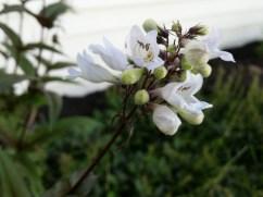 Galaxy S5 Review - Sample Photos - 4