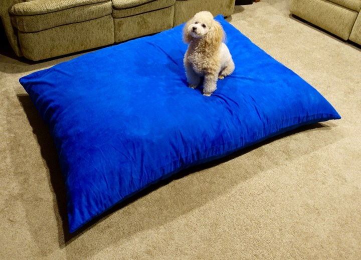 The Sumo Lounge Omni Plus is big when you lay it out. Toy Poodle for scale.