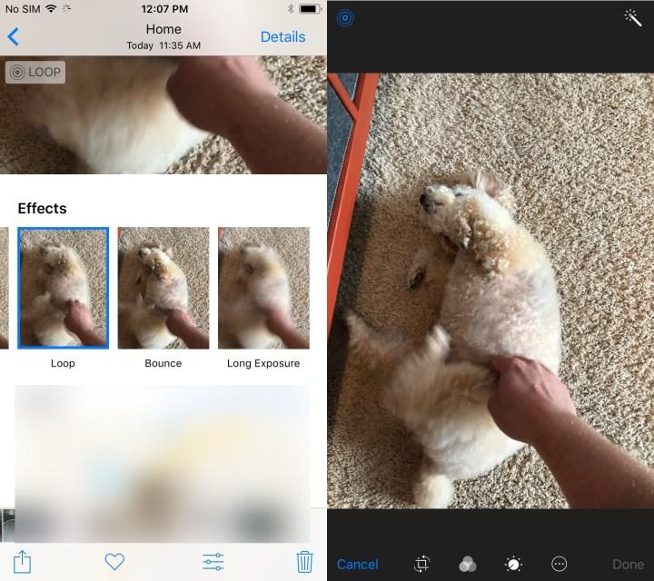 iOS 11 Live Photos Upgrades
