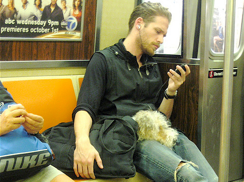 Sleepy Dog in New York Subway By Annie Mole on Flickr