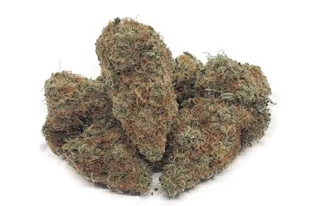 gelato strain weed cannabis marijuana featured
