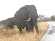 A Self-Driving Safari in Kruger National Park: How Not To Get Run Over by an Elephant