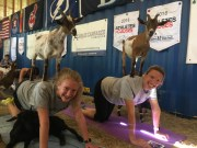 Yoga With Goats is the New Craze (And We'll Tell You Why!)