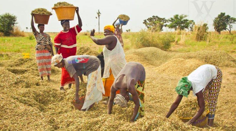 Senegal on the road to food self-sufficiency