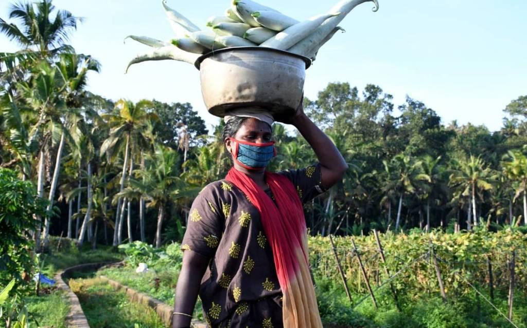 Kerala Basic Price Scheme 2020