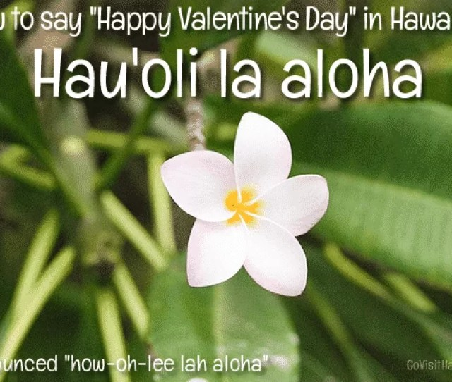 Happy Valentines Hawaiian One Way To Impress Your Sweetheart On Valentines Day