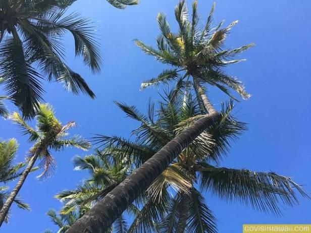 Hawaiian+Vacation+Deals