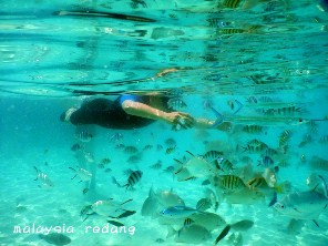 Snorkeling in front of Laguna Redang Island Resort