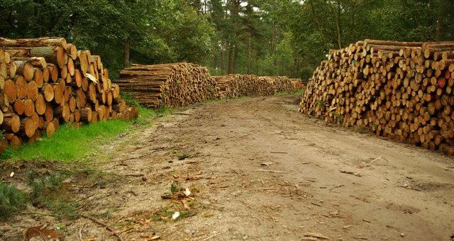 Log piled up by forest track