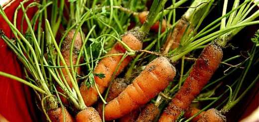 Bowl of small soily carrots