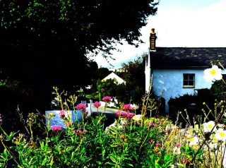 Limetree Cottage self-catering cottage, Port Eynon, Gower