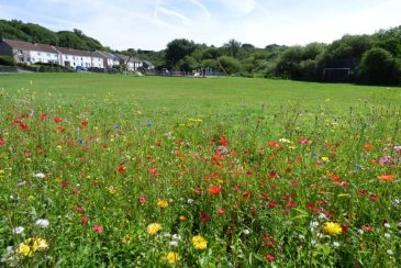 Summer flowers and the childrens' playground at Dunvant, Swansea, South Wales
