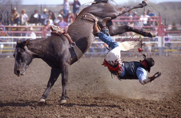 Rodeo romp at Miles City Bucking Horse sale
