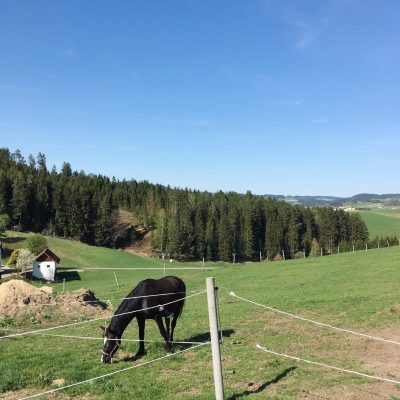Moser Alm, GoWithTheFlo0