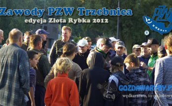 Złota rybka gozdawaryby.pl galeria