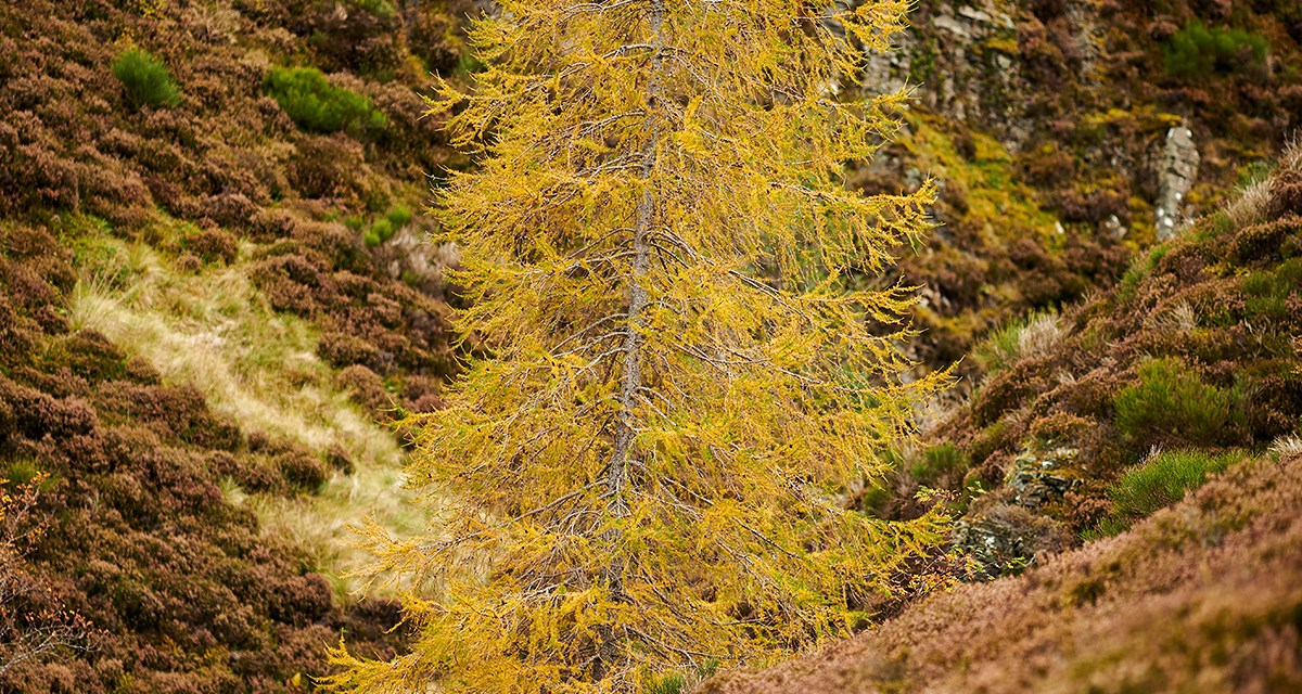 Cairngorms Nationalpark – Linn of Dee