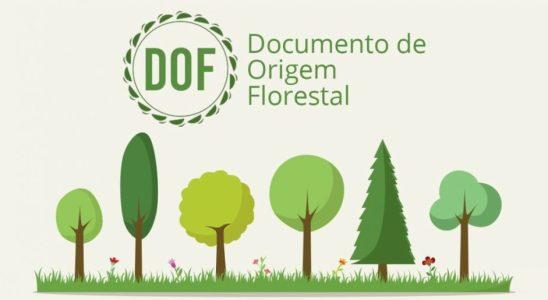 documento de origem florestal