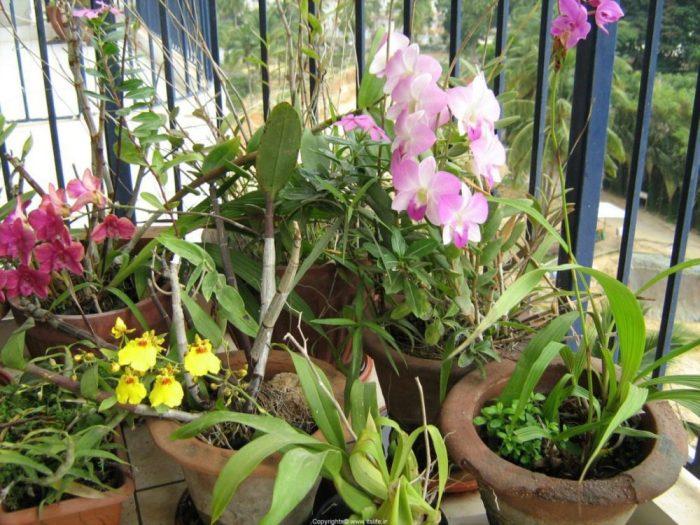 dicas cultivo orquideas