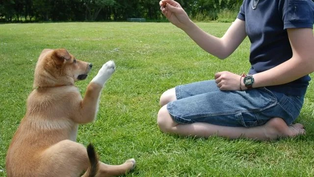 calmante cachorro
