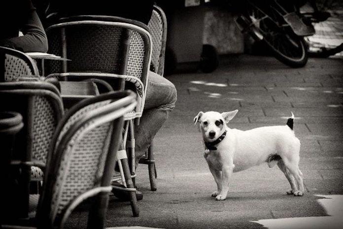 Photo d'un chien près de la terrasse d'un café parisien