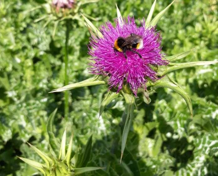 À Paris, le retour des pollinisateurs sauvages