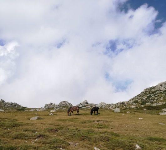 Chevaux en liberté - GR20 Corse