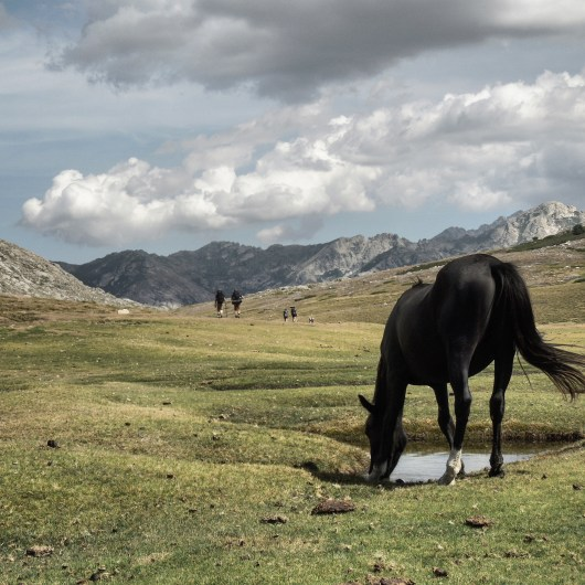 Horse picture - at Lac de Nino