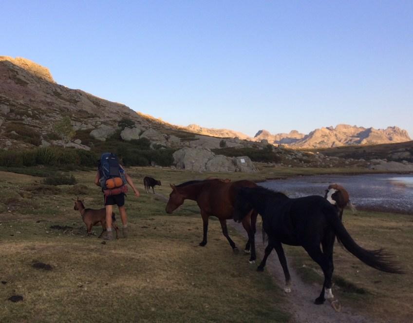 Lac de Nino et la rencontre avec les chevaux