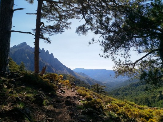 mountain-and-forest-corsica