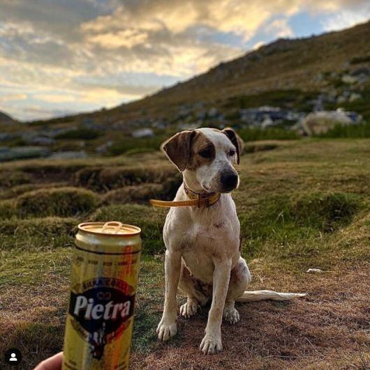 Refuge de Prati - Le chien du gardien qui se nomme Pietra - Jeremy