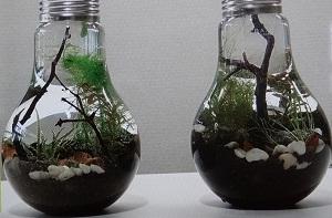 【スッキリ】グラスアクアリウム作りを体験!渋谷のSENSUOUS(センシュアス)