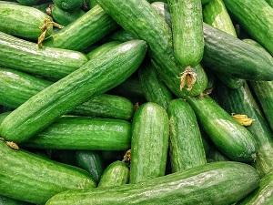 【あさイチ】貴重なきゅうりの栄養素!脂肪を分岐する酵素や抗がん作用も