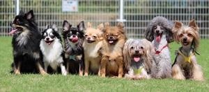 モーニングショー:バケツに無理やり入る6匹の子犬たちの動画!