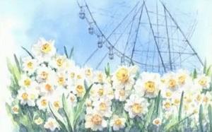 【プレバト】水彩画の才能査定ランキング!岩永徹也!白い花を描く時のポイント