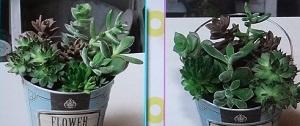 【ヒルナンデス】多肉植物インテリア!ドケチ隊のハンドメイド主婦の副業!滝沢カレンも参戦