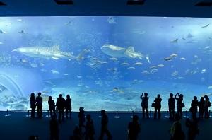 加茂水族館(クラゲドリーム館)が幻想的で癒されると話題【あさイチ】
