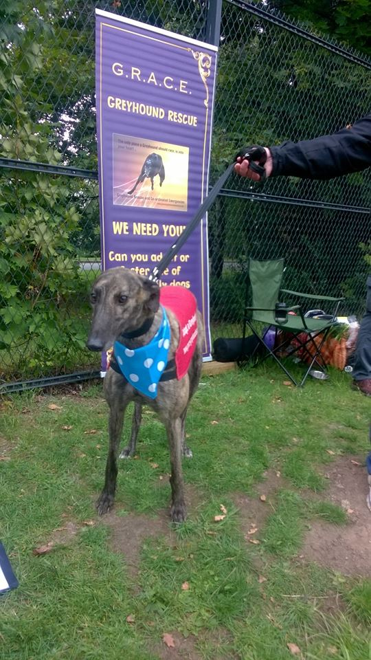 Frankie - Brindle (NB: Out at trial home)