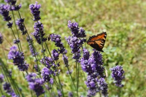flowers-and-butterfly