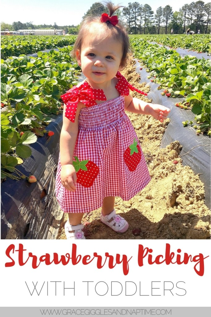 Strawberry Picking with Toddlers