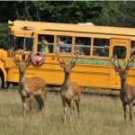 Wycieczki szkolne jednodniowe - Wycieczka Jura Park Bałtów