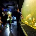 Wycieczki szkolne jednodniowe - Świętokrzyska oceanika