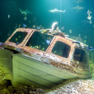 Świętokrzyska oceanika