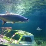 Oceanika akwarium